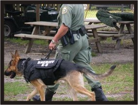 Sheriff K9 with Deputy showing off new bullet/stab resistant vest